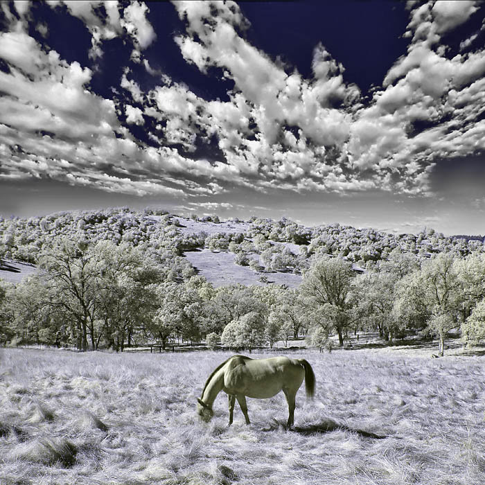 Digital Infrared IR Photography